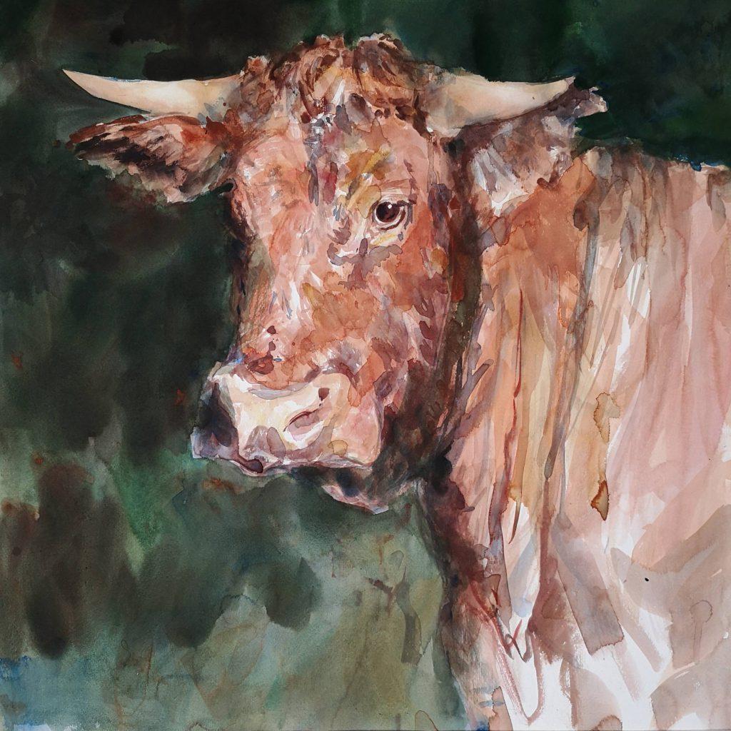 Cow, watercolor, 70x70cm