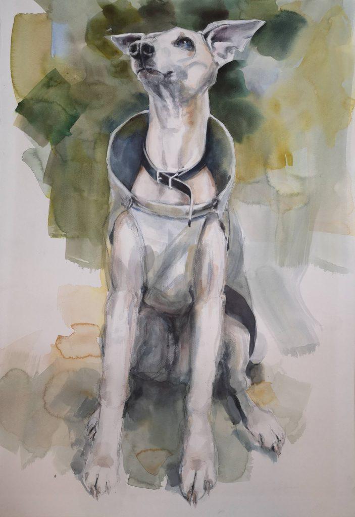 Dorus waiting, watercolor, 70x50cm