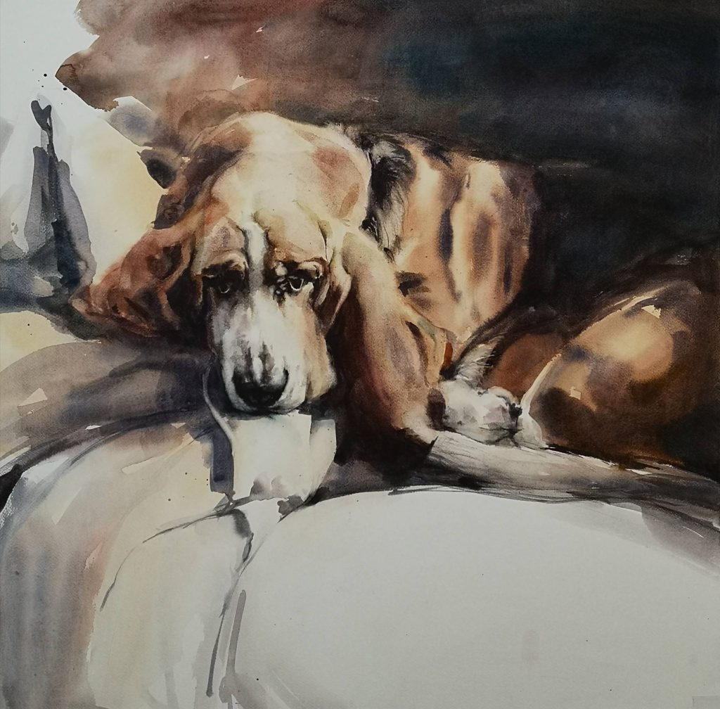 Flow the Basset sleeping, watercolor, 68x68 cm