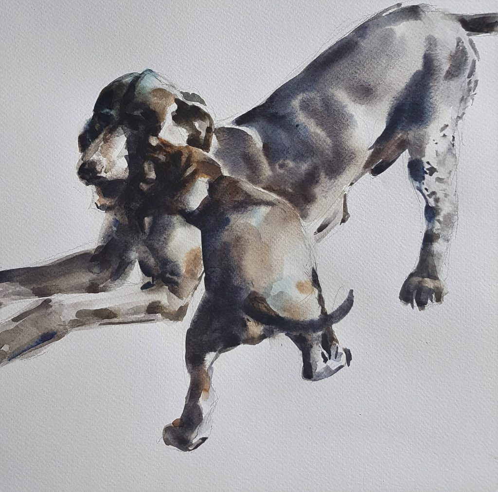 Playing dogs, watercolor, 30x30 cm (2)