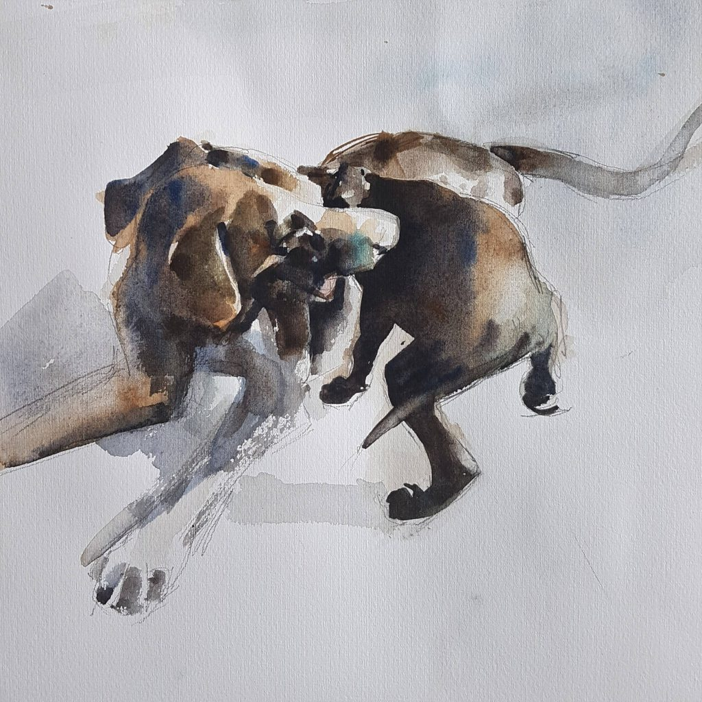 Playing dogs, watercolor, 30x30 cm (3)