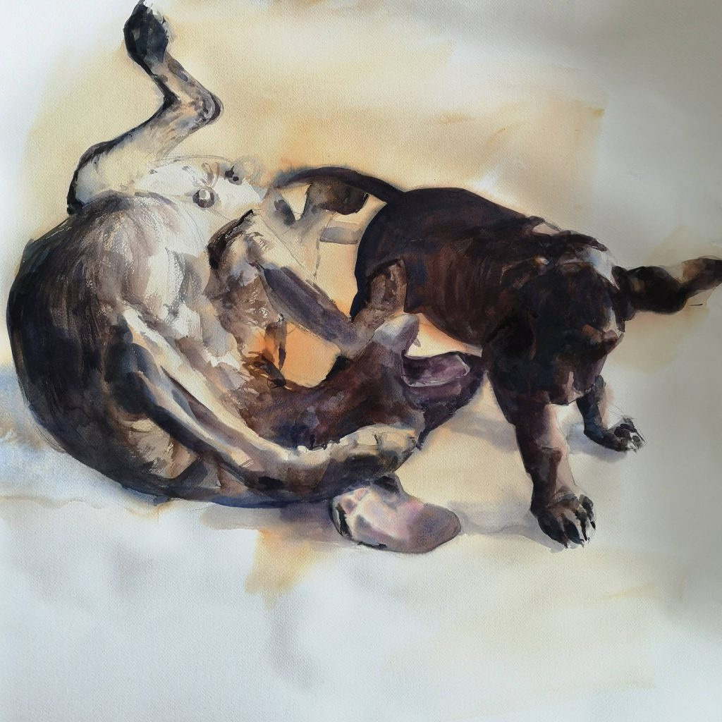 Playing dogs, watercolor, 70x70 cm cm